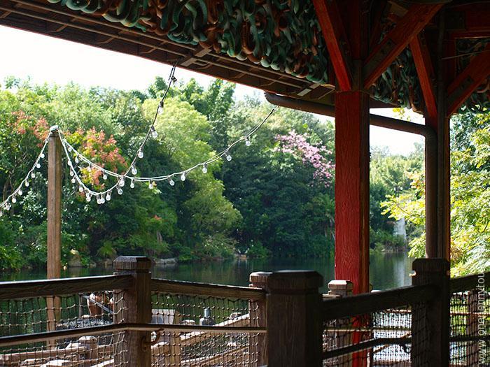 Surprising photos of Walt Disney World. Disney's Animal Kingdom - waterside seating. OnePennyTourist.com