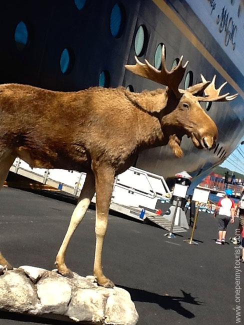 A Moose welcomed us back aboard the Disney Magic in Kristiansand Norway. Cute! OnePennyTourist.com