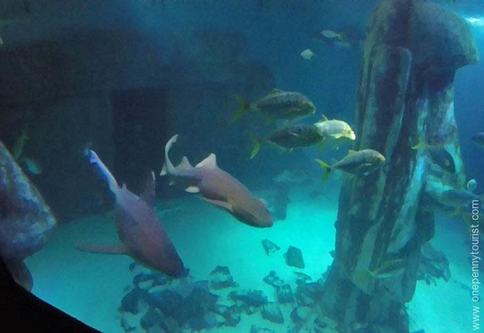 Sharks at the Sealife London Aquarium. OnePennyTourist.com